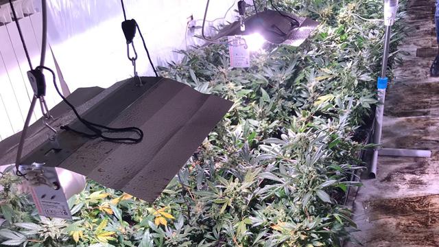 In ore tiri su una serra idroponica per la cannabis motherboard